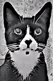 Tuxedo Cat Press